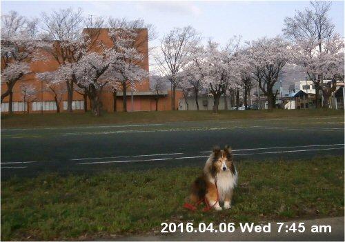 02a 500 20160406 0745 from桜並木toward南葉連山 Erie zu