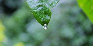 02c 300 a drop of rain
