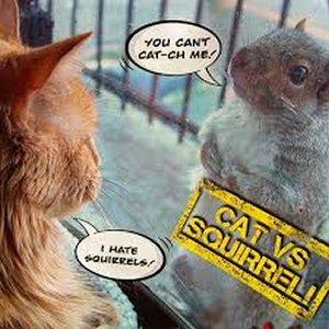 300 cat and squirrel LOL