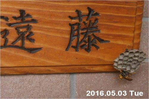 03c 500 20160503 蜂の巣 on 表札