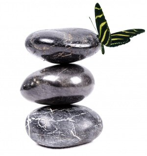 02 300 禅石と蝶