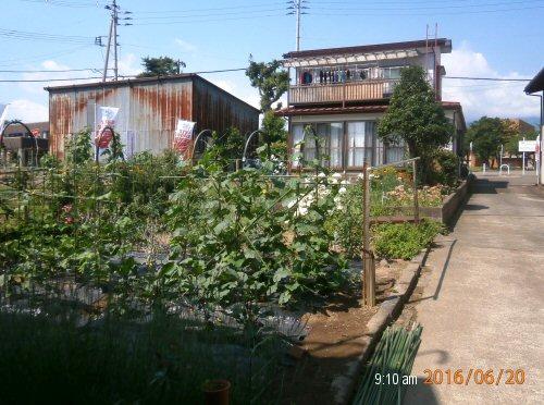 02a 500 20160620 0910 LL_garden