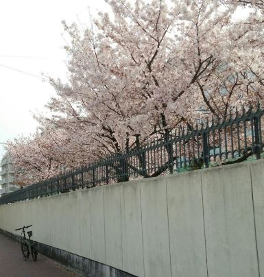 DAHON桜2