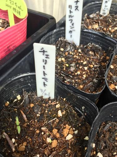 tomato160406-1