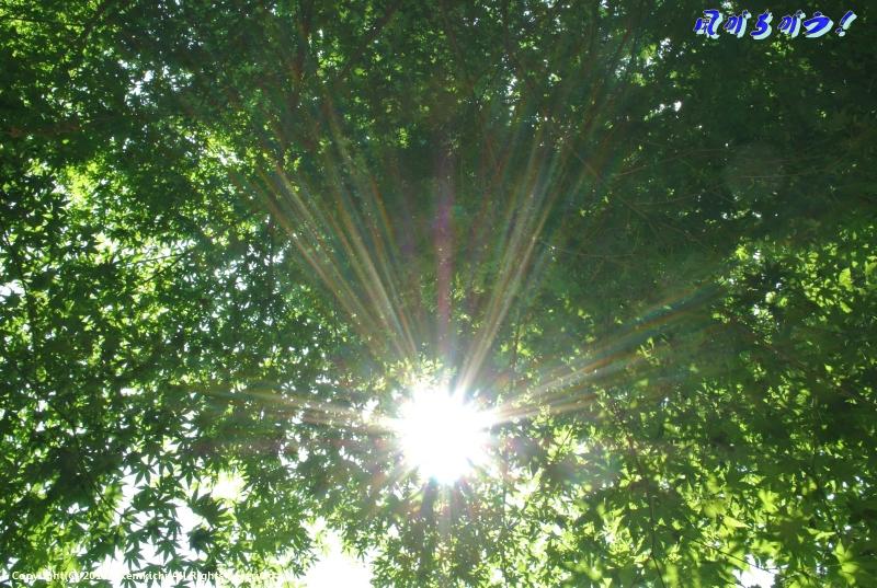 四季の森 ヒメヒオウギ 025