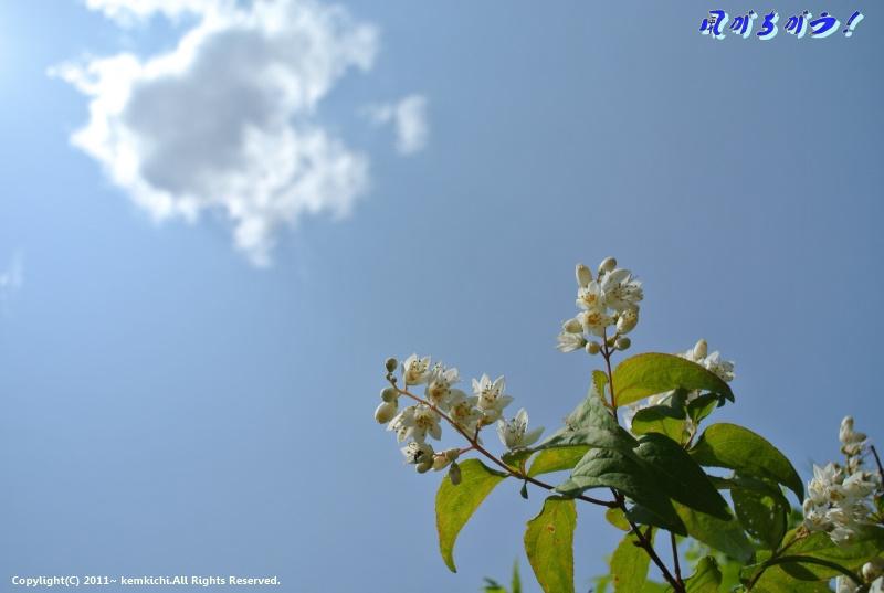四季の森 ヒメヒオウギ 028