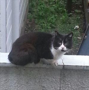 20160411通りがかりの猫_R