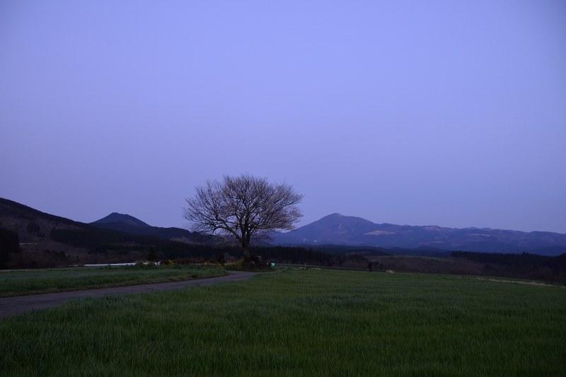 前原一本桜 (9)