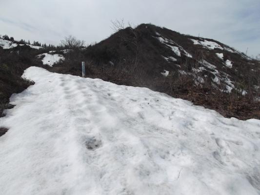 明神コース 残雪の下山道