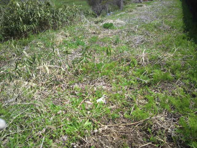 耕作放棄地(草刈前)