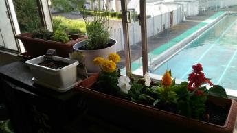 植物日記_3589