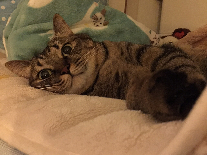 2015年10月19日撮影のキジトラ猫クーちゃん1