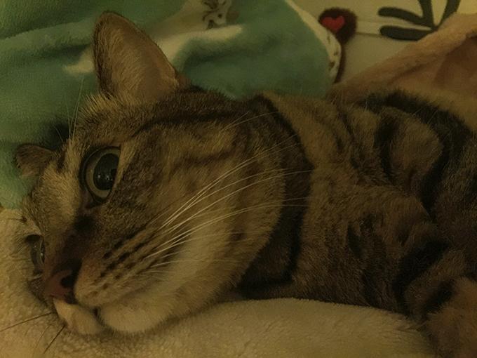 2015年10月19日撮影のキジトラ猫クーちゃん3