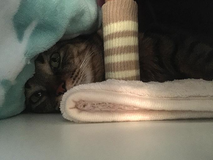 2015年11月05日撮影のキジトラ猫クーちゃん