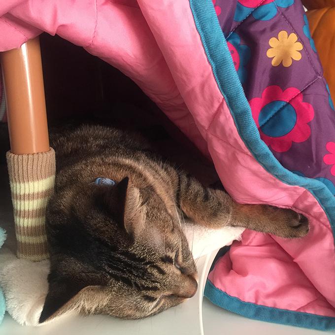 2015年11月06日撮影のキジトラ猫クーちゃん
