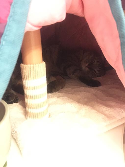 2015年11月08日撮影のキジトラ猫クーちゃん