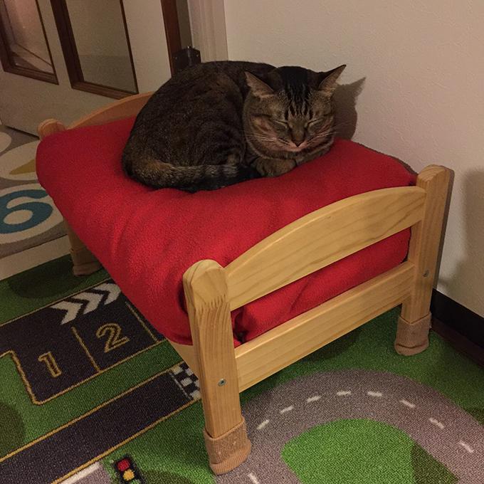 2015年11月24日撮影のキジトラ猫クーちゃん
