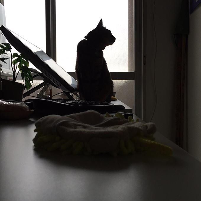 2015年11月20日撮影のキジトラ猫クーちゃん