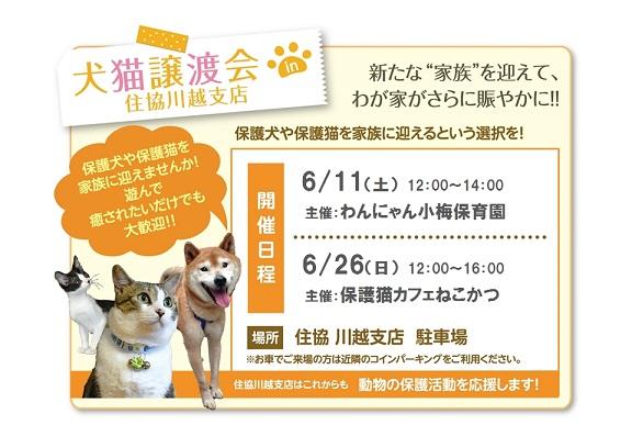 住協 川越支店 保護猫譲渡会