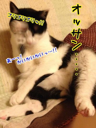 MyNZkY07ADiS2q51462935993_1462936367.jpg