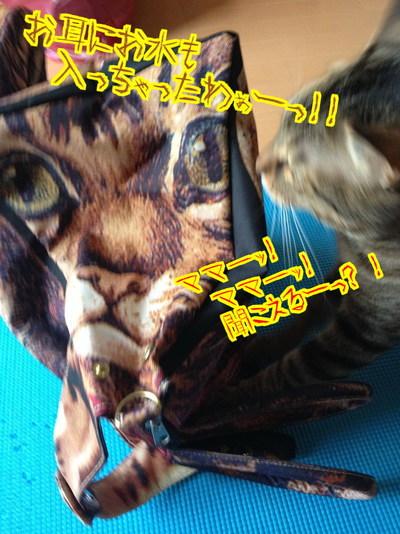 bIjTHksreybwFs61466763518_1466763790.jpg