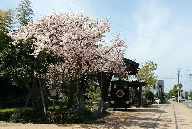 sakura-mizuma.jpg