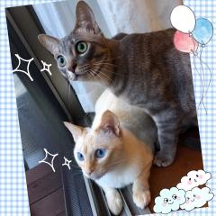 ロタちゃん&モアナちゃん