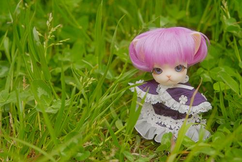 グルーヴの動物ドール、パンジュの女の子、キャンベルパント(カスタムあり)を野原に連れて行きました