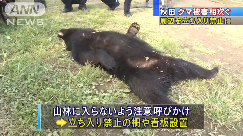 0707_Akita_kuma_higai_20160611_top_02.jpg