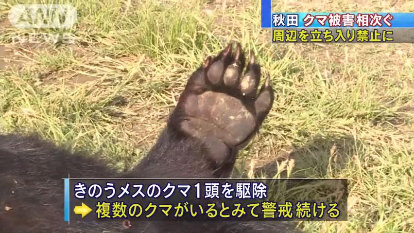 0707_Akita_kuma_higai_20160611_top_04.jpg