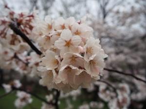 上田城13