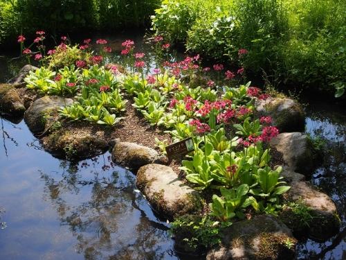 箱根湿生花園(7)