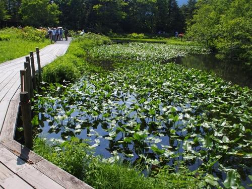 箱根湿生花園(8)