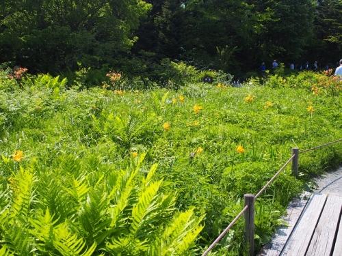 箱根湿生花園(9)
