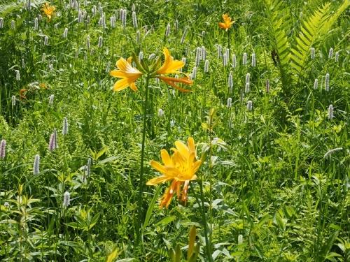 箱根湿生花園(10)