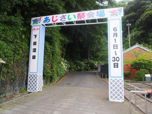 下田あじさい(3)