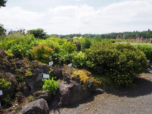 花の都公園(5)