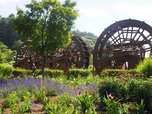 花の都公園(13)