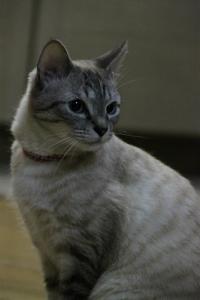 美猫、リボンちゃんです