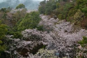 神山森林公園2