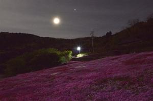 満月の芝桜畑