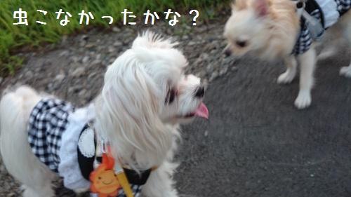 DSC_3990a.jpg