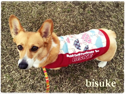 busuke11.jpg