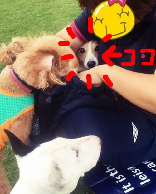 o-jiwosagase2.jpg