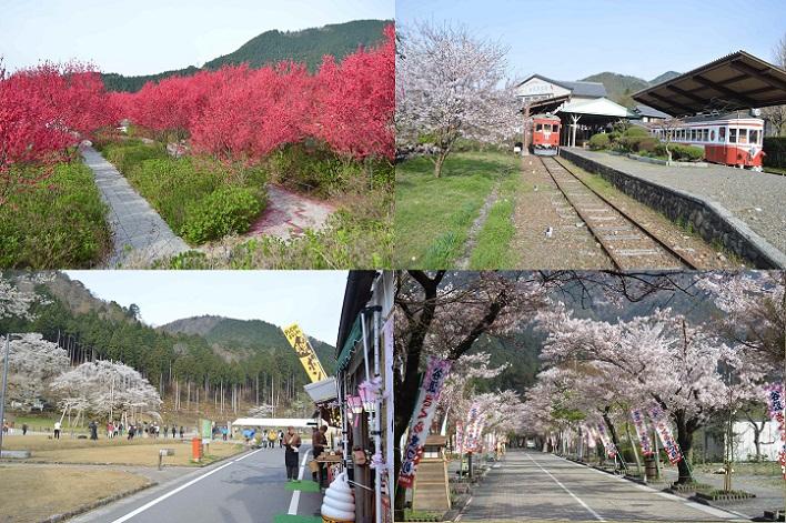 DSC_4872-0 160409 桜