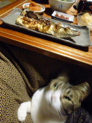 朝晩はお膝猫の食卓