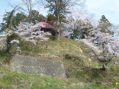 ひとそれぞれに、それぞれの桜