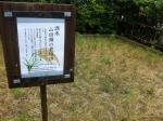 160528 (81c)神戸酒心館山田錦栽培田