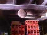 150726 (42)藤井酒造_酒林