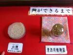 150422田中酒造④麹 (3)サンプル